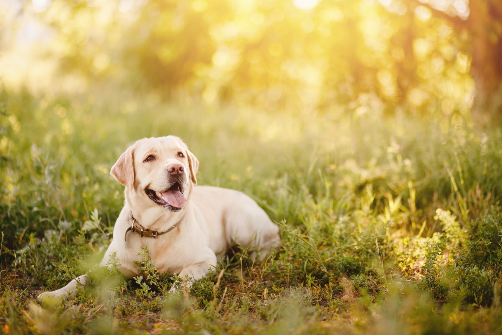 Familias interespecie: cuando el perro figura en el árbol genealógico