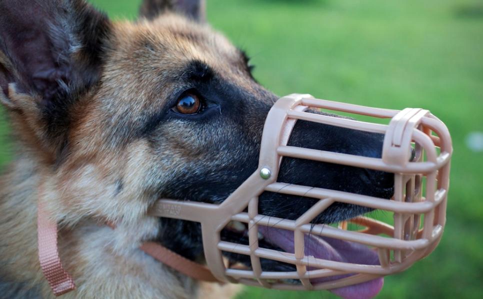 La infracción más habitual entre los dueños de perro en Badajoz es llevarlos sin bozal